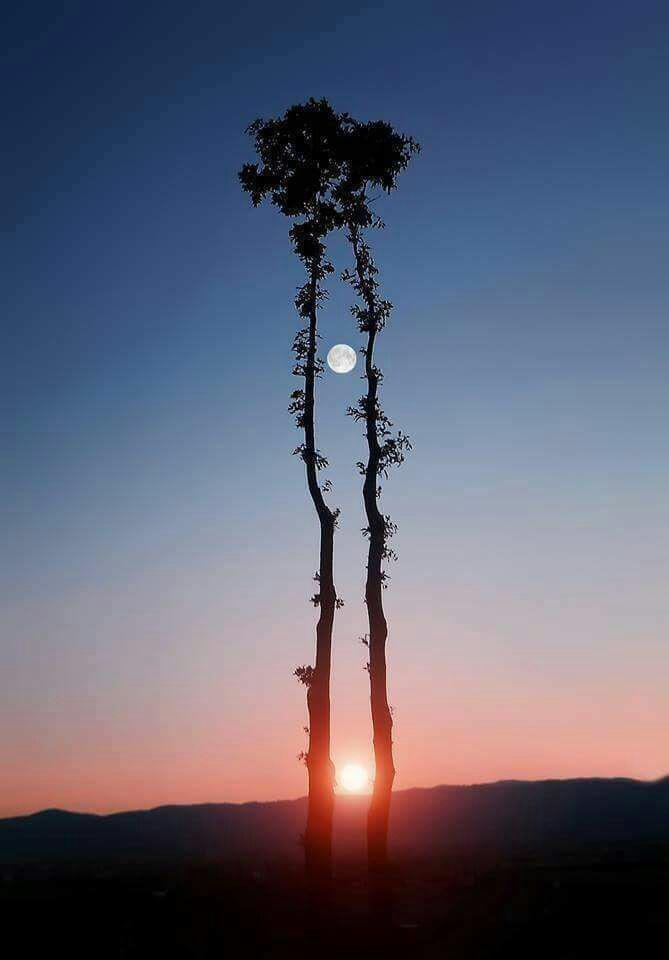 <p>German camera man's master picture of Moon and Sun </p> <p>A German photographer whose name is not known had fixed 16 cameras to get this shot.</p> <p>He had to wait for…