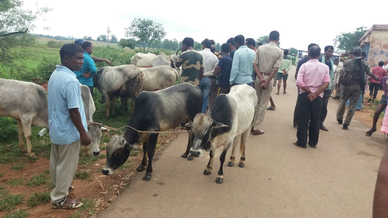 <p>Locals of Choriya village under Chanho block of Ranchi district today apprehended a herd of 16 cows being smuggled, however the cow smugglers managed to give a slip to the villagers.</p>…