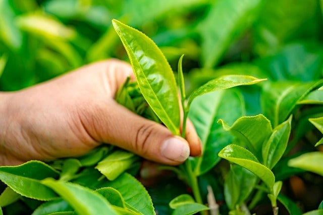 <p>The world joined hands today to celebrate International Tea Day on May 21, 2021. The day is observed primarily with a view to increasing consumption of tea. The UN has said tea…