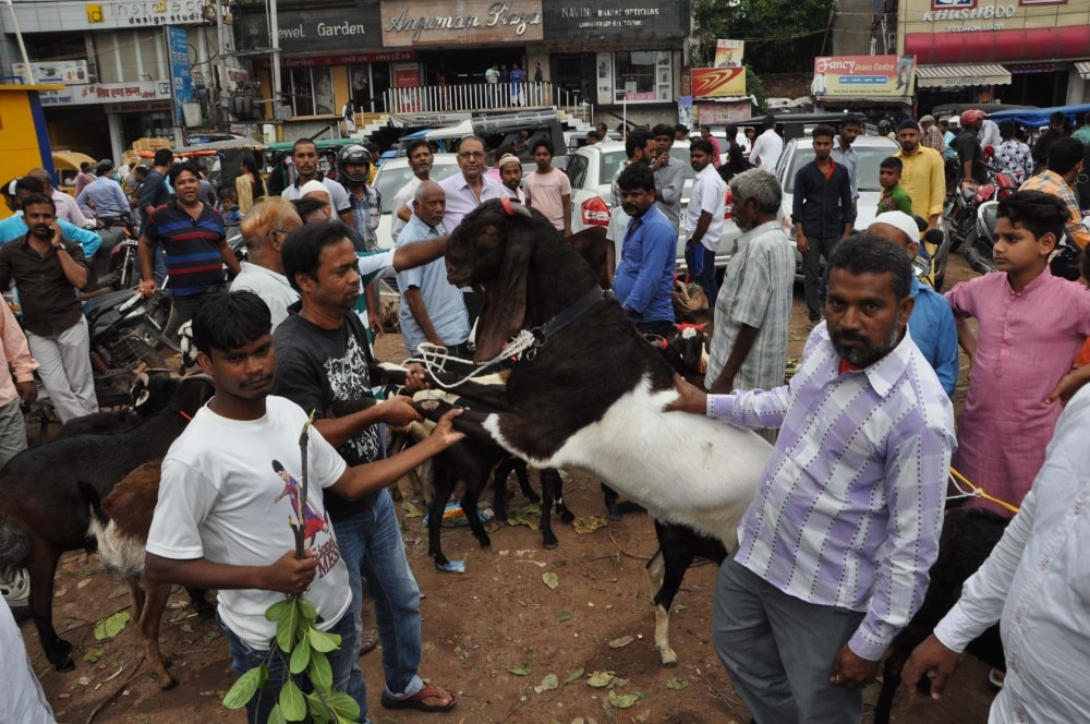 <p>People buy goats for Eid-al-Adha at a livestock market in Ranchi on Friday.</p>