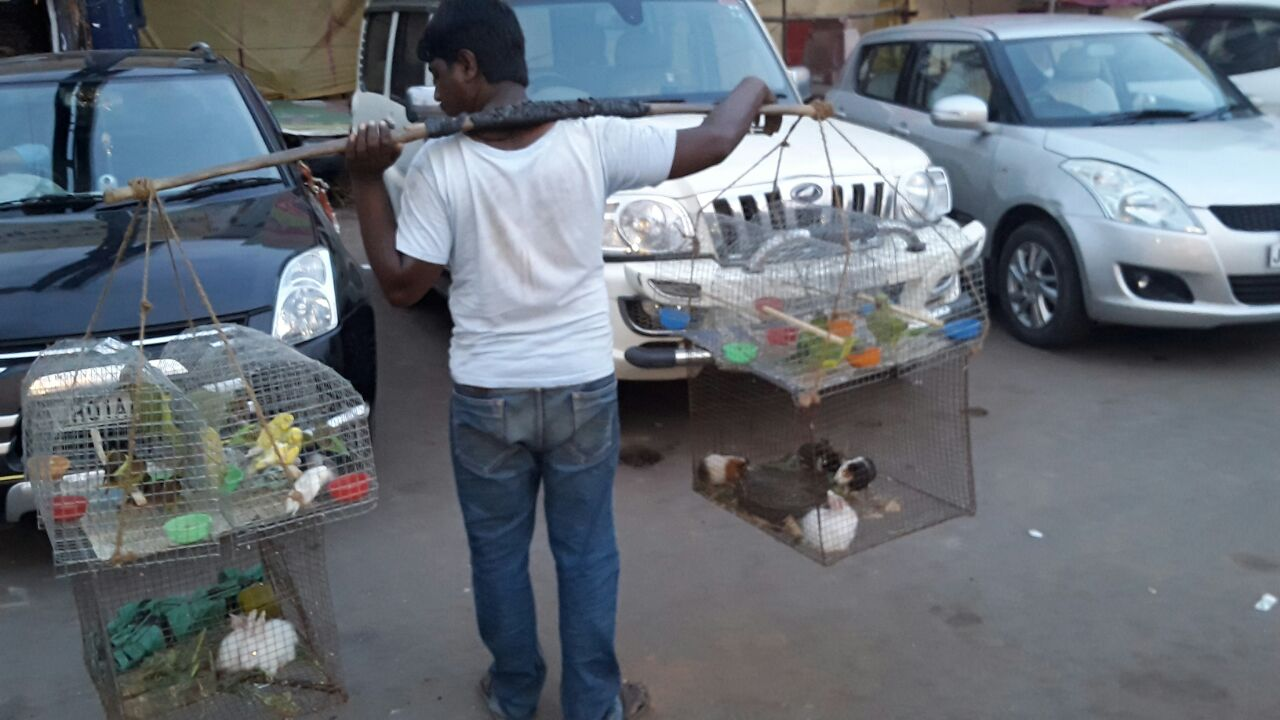 <p>Birds- including parrots and rabbits- sellers in Main Road,Ranchi.</p>