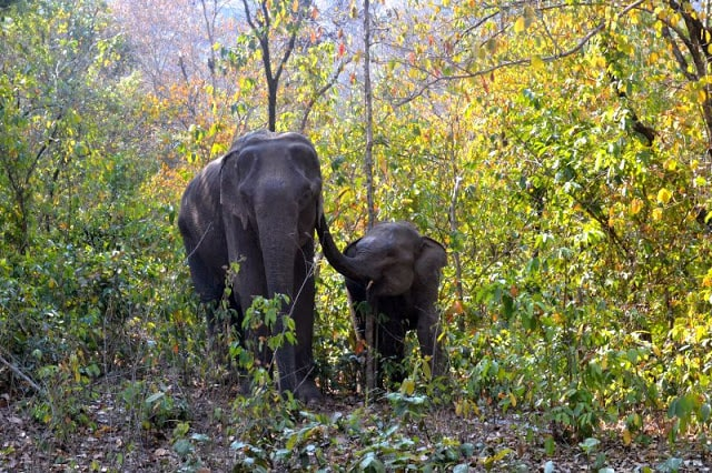 <p>Wild elephants demolished a hut resulting in the death of a woman and her six-month-old child in Hupad village under Sadar block in Hazaribagh, nearly 90 km from Ranchi. The hut…