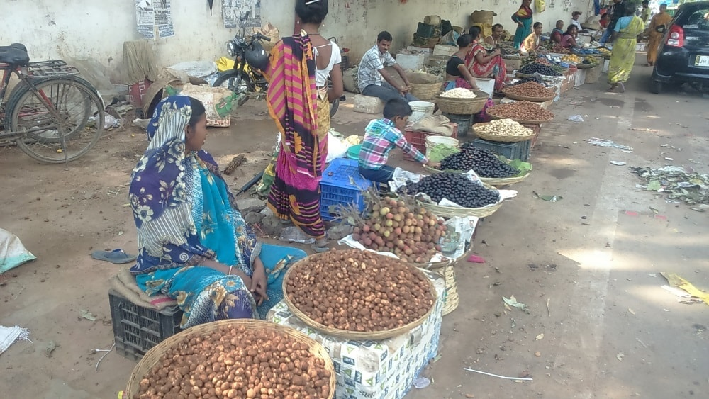 <p>Selling like a hot cake at Rs 400 per kg at Kutchery chowk in Ranchi,Phutka-puffballs-looking wild mushrooms(Scleroderma),grown in Sal(Shorea robusta)forest and harvested during…