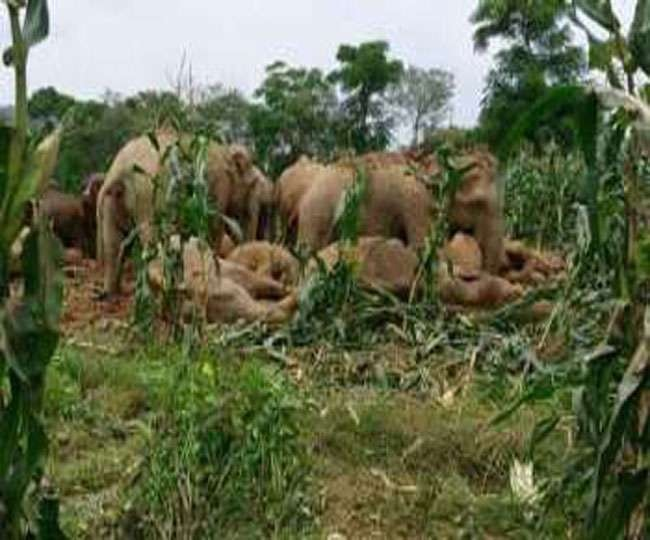 <p>With West Bengal Govt putting up trench in its border area,the age old route of elephants was blocked.Result?Wild elephants were entering into towns in West Bengal and in Jharkhand,they…