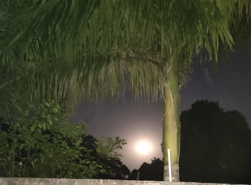 <p>Lockdown beauty of the fool moon. This beauty of the moon was visible behind green trees and the clean sky at JCSOI.</p> <p>The time was 4 pm on April 7 when the ongoing Lockdown…