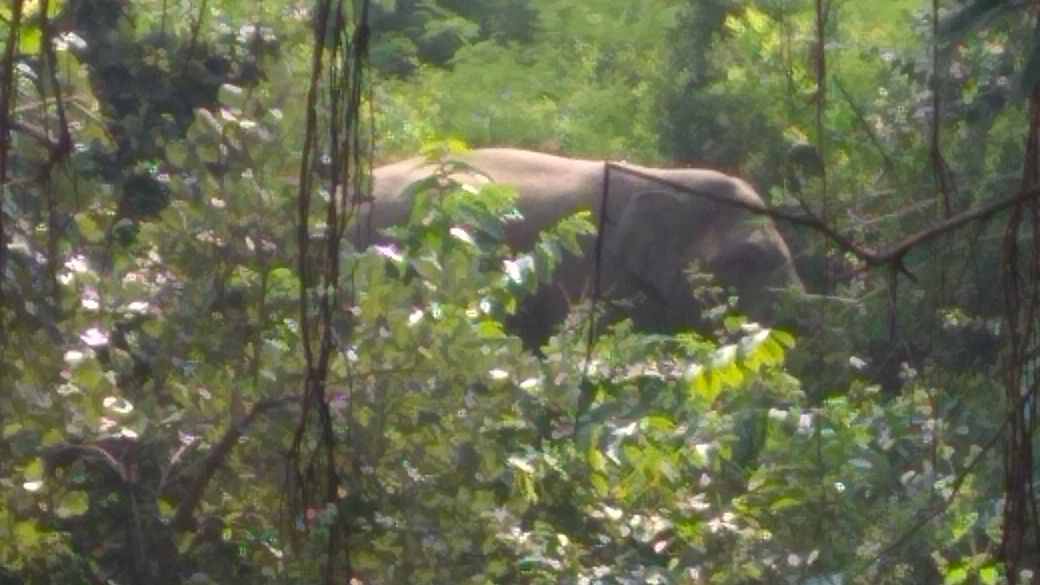 <p>A small herd of wild elephants have been spotted on the outskirts of jungle in Khelari block under Ranchi district.The forest officials from the block have been put in high alert…