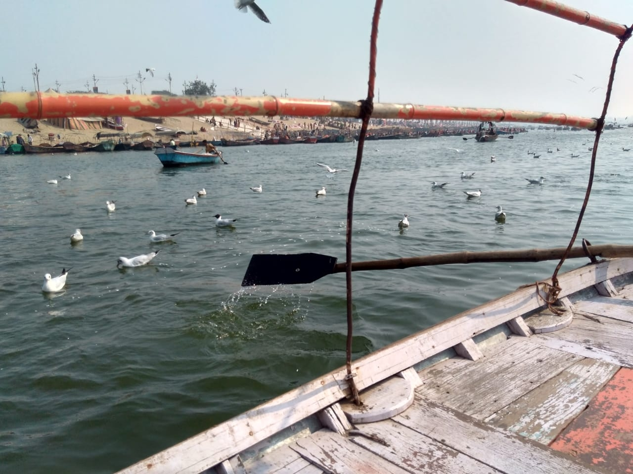 <p>Siberian migratory birds at Sangam, Allahabad. Visited today.</p>