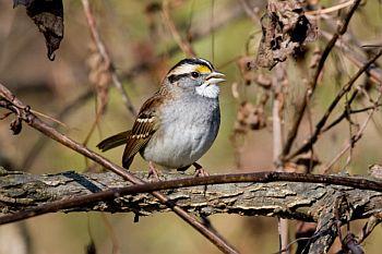 Like humans,birds love music!