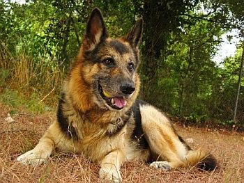 Killed by Gunman, FBI dog to be memorialized