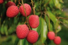Fruit production goes up,demanding customization of horticulture plan at regional level