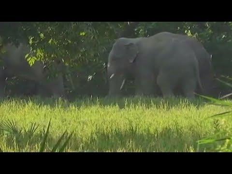 Elephants destroy crops, Palamau farmers wait for compensation