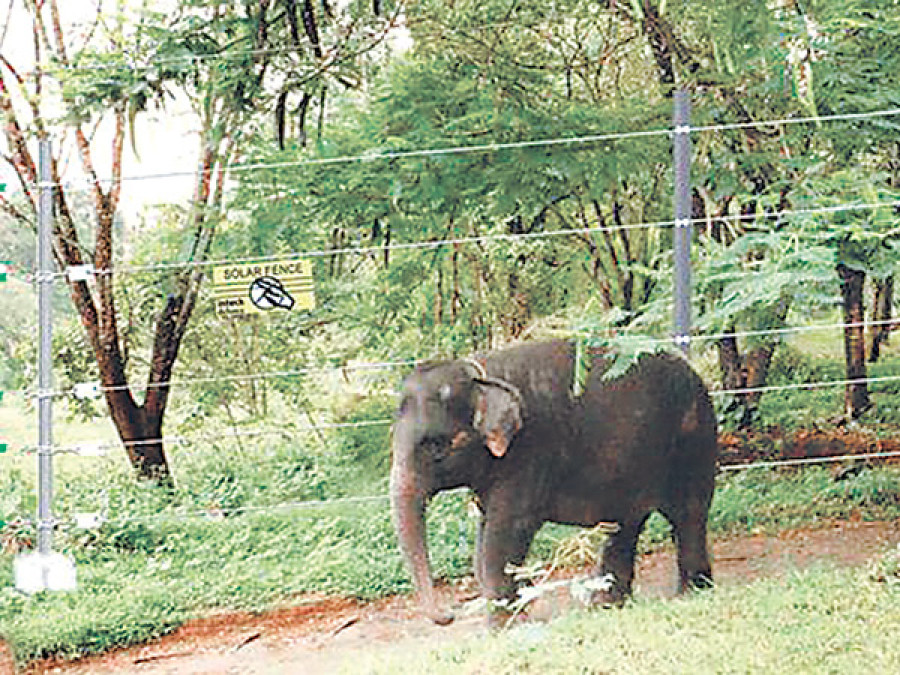 Farm owner electrified fence to protect banana trees,tusker dies
