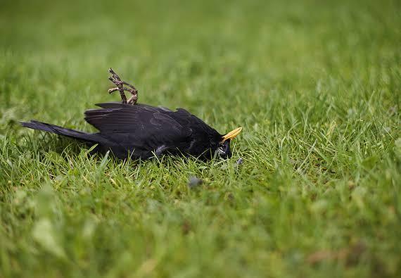 Dead birds create bird flu scare in Jharkhand