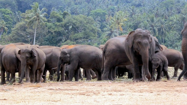 tribal-took-cattles-for-grazing-elephant-trampled-him-to-death-in-palamau-tiger-reserve-forest