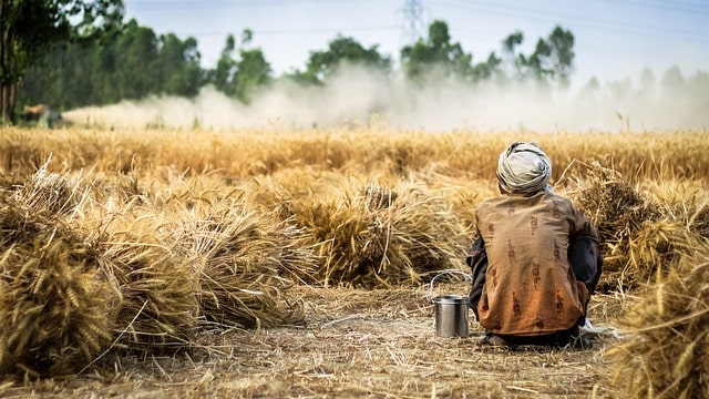 forget-covid-19-wheat-procurement-up-by-30-percent-over-last-year-in-india