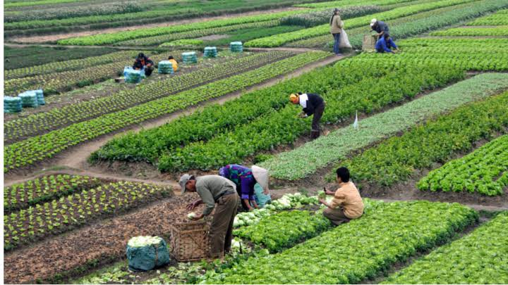 india-s-agriculture-trade-grows-during-2020-21