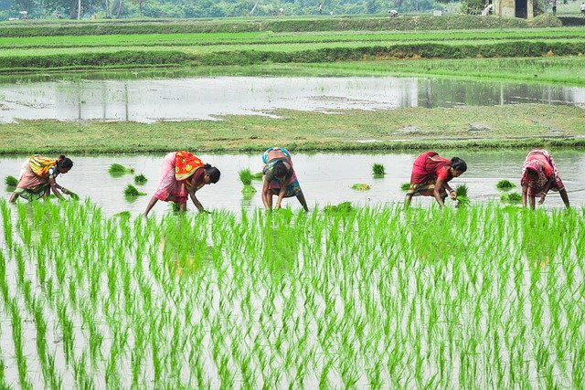 as-monsoon-retreats-farmers-expect-to-harvest-bumper-kharif-crops