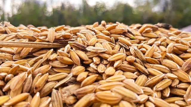minus-jharkhand-many-states-recorded-highest-procurement-of-wheat-paddy